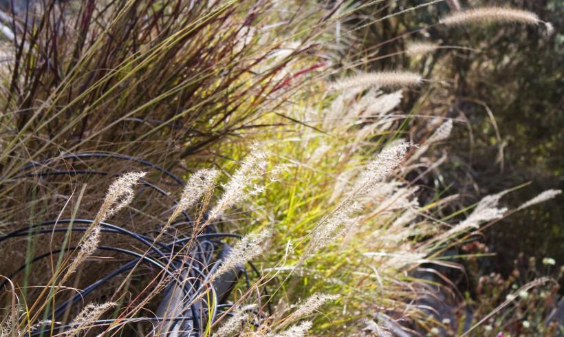 CALIFORNIA NATIVE PLANT SOCIETY  MEETING