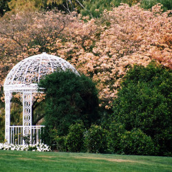 laurie rennie - wedding gazebo
