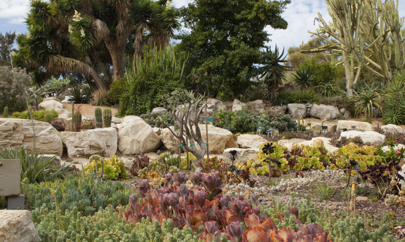 SOUTH COAST CACTUS AND SUCCULENT SOCIETY MEETING: Australian Rock and Tree Dwelling Succulents