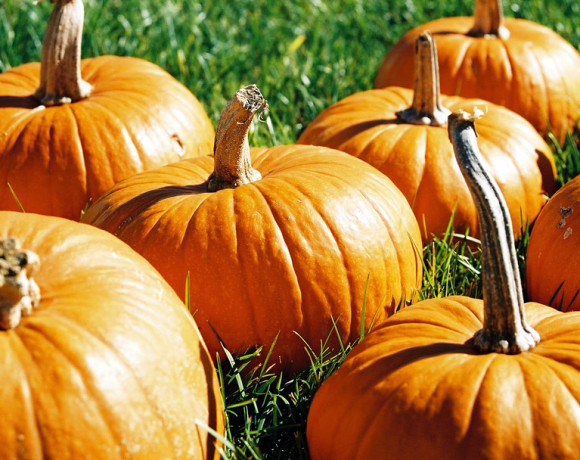 20 Prime Pumpkin Patches