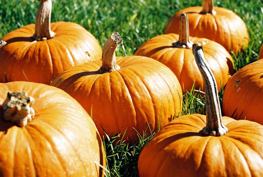 20 Prime Pumpkin Patches