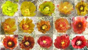 flowercollge-2