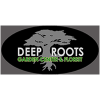 Deep Roots – Manhattan Beach