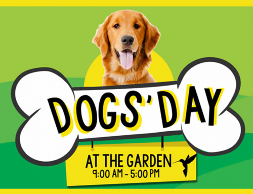Who Let The Dogs Out…Er, In? We Are For Our First-Ever Dogs' Day!