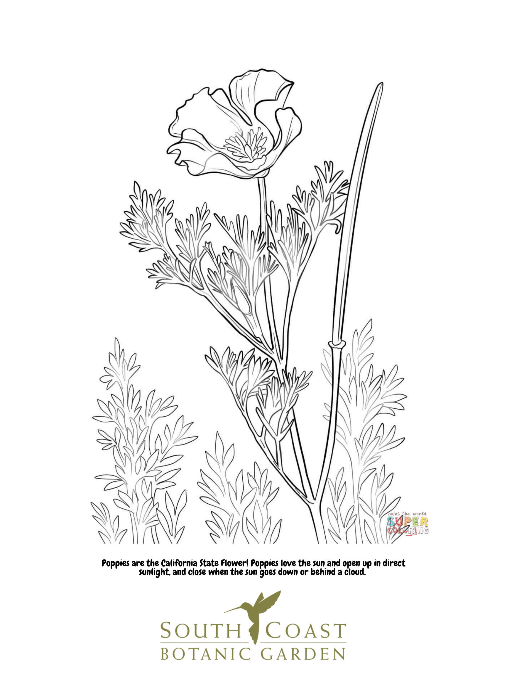 Coloring pages seeds and plants | 2304x1728