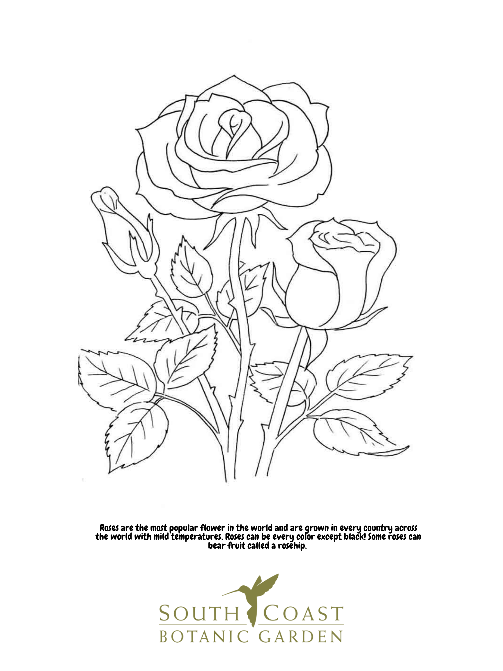 Trolls Poppy Troll Coloring Pages Printable | 2304x1728