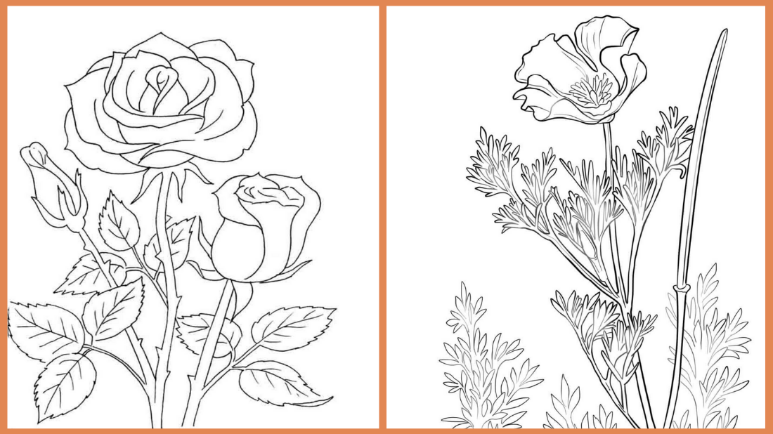 Free Life Cycle Of A Plant Coloring Page, Download Free Clip Art ... | 618x1100
