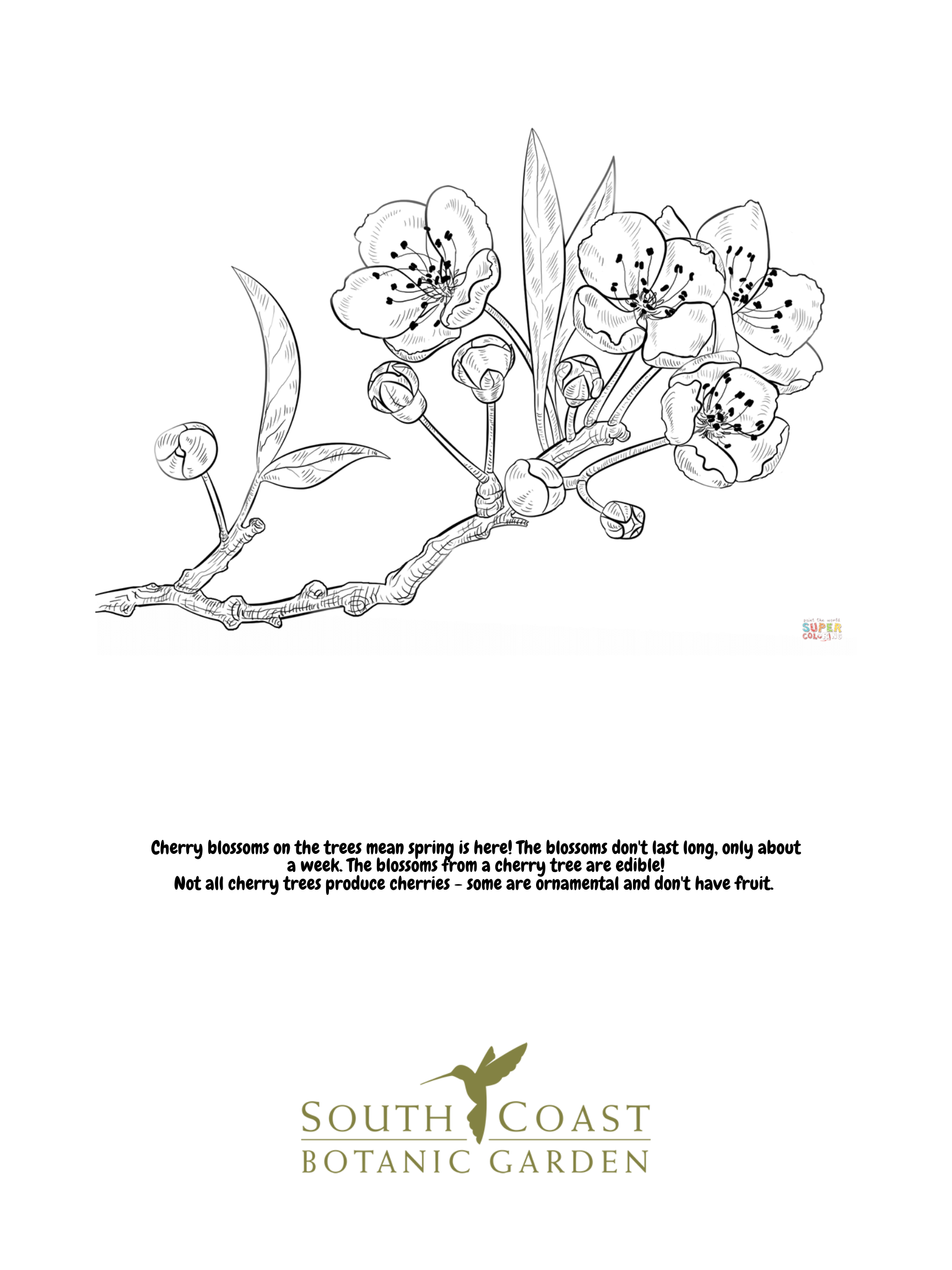 Seeds Of Fun Cherry Blossoms And Cactus Flower Coloring Pages South Coast Botanic Garden Foundation