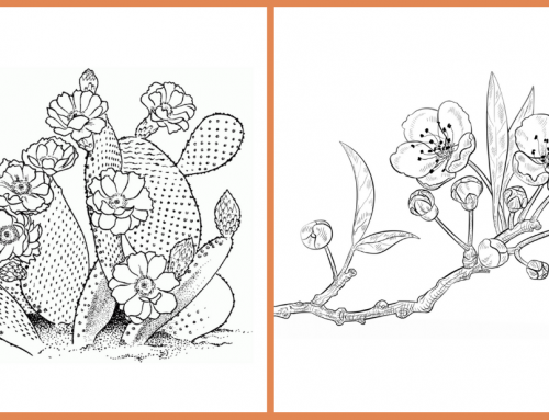 Seeds of Fun: Cherry Blossoms and Cactus Flower Coloring Pages