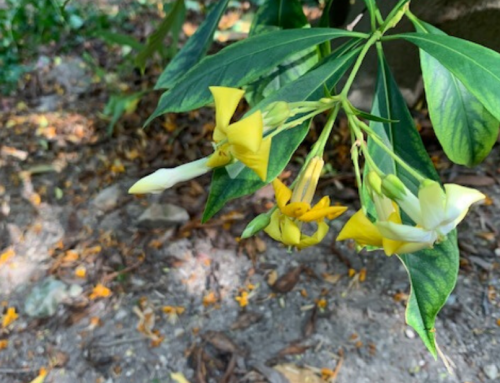 What's Blooming in the Garden: May 12