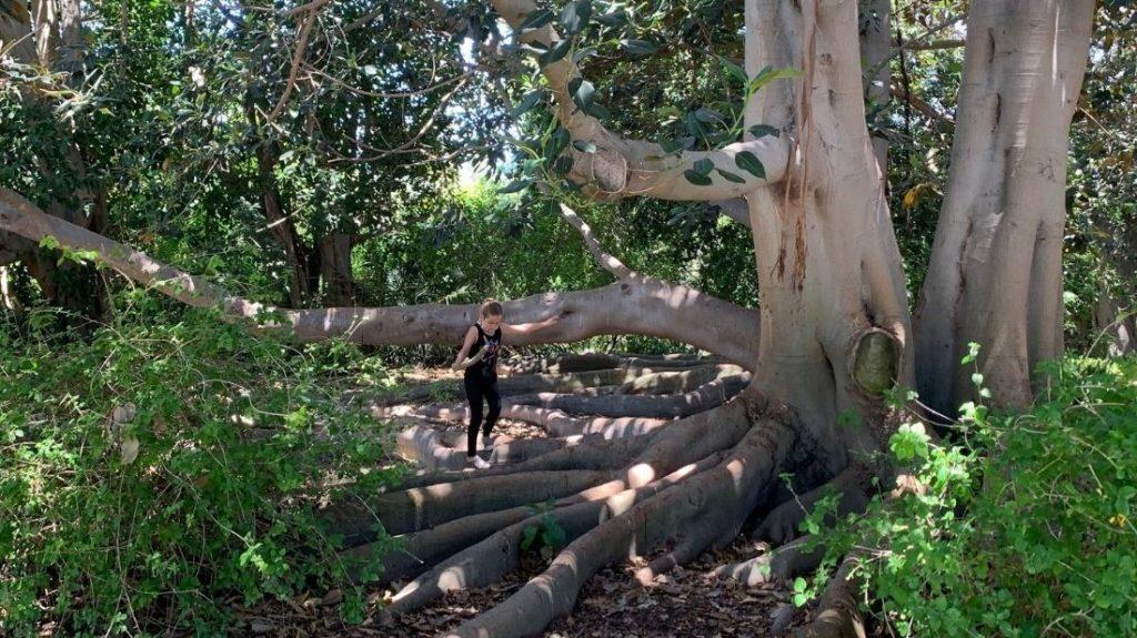 Banyan Grove