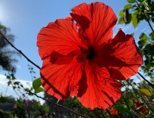 What's Blooming in the Garden: Week of August 24