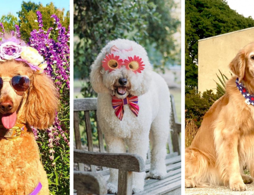 Celebrate National Dog Day with Our PAWsome Photo Contest!