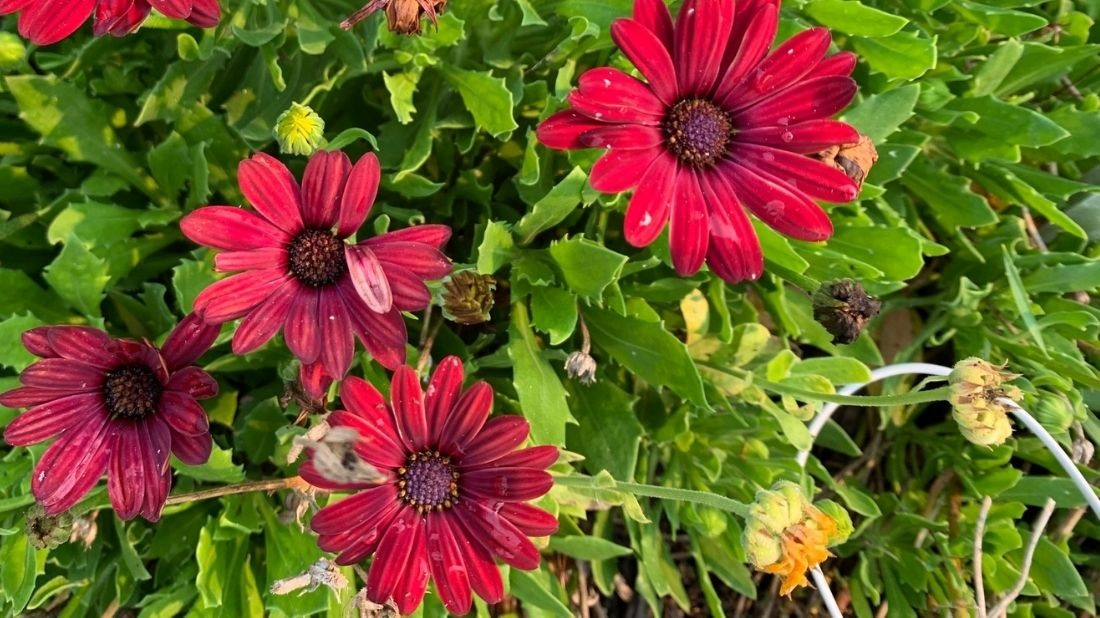 What's Blooming in the Garden: Week of August 8