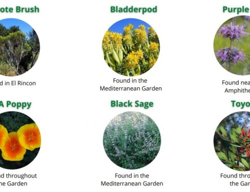 Seeds of Fun: All About California Native Plants
