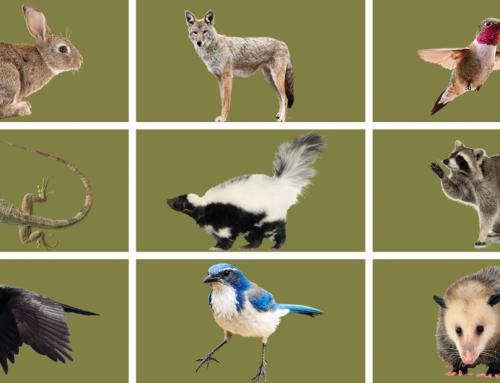 Seeds of Fun: Animals in the Garden