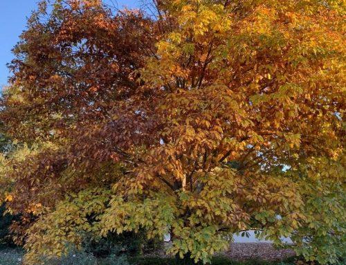 What's Blooming in the Garden: Week of November 16