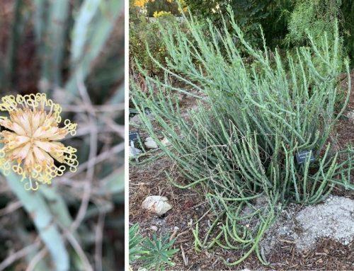 What's Blooming in the Garden: Week of November 23